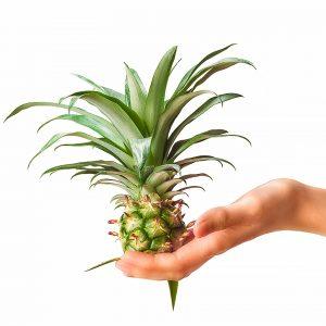 Ananas na dłoni - fotografia produktowa - Orbin studio